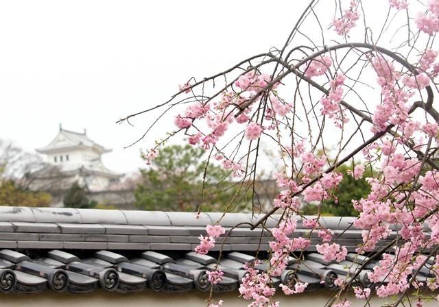 花と塀 4