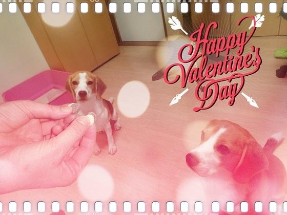今日はバレンタイン!!