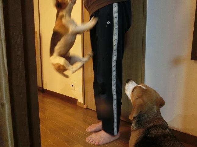 jump jiro