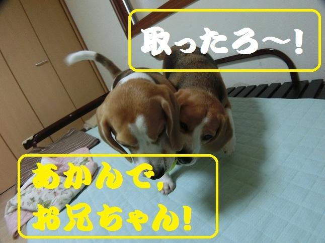 CIMG5656②