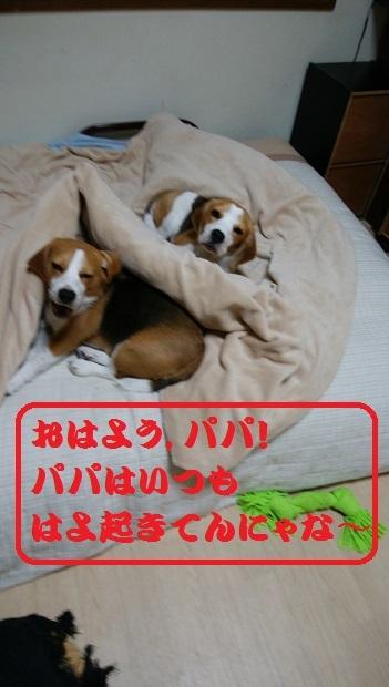 IMG_20170308_043449.jpg