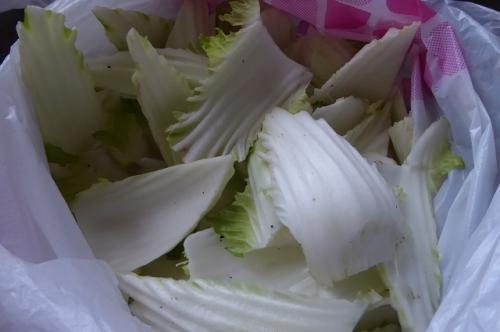 白菜の白い部分