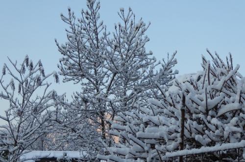 3月の雪の朝