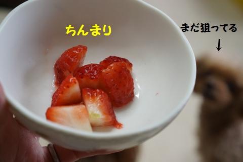 DSC01558.jpg