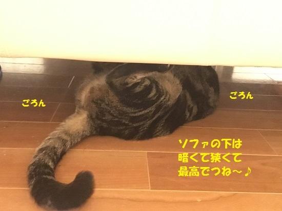 2017円2月16日①