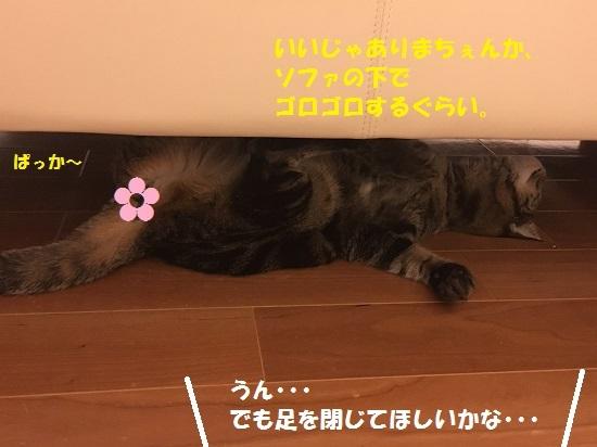 2017円2月16日③