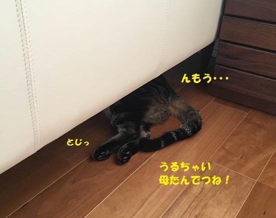 2017円2月16日④
