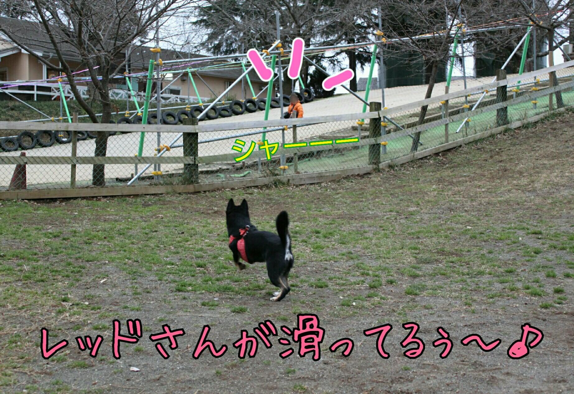 20170312095932fc3.jpg