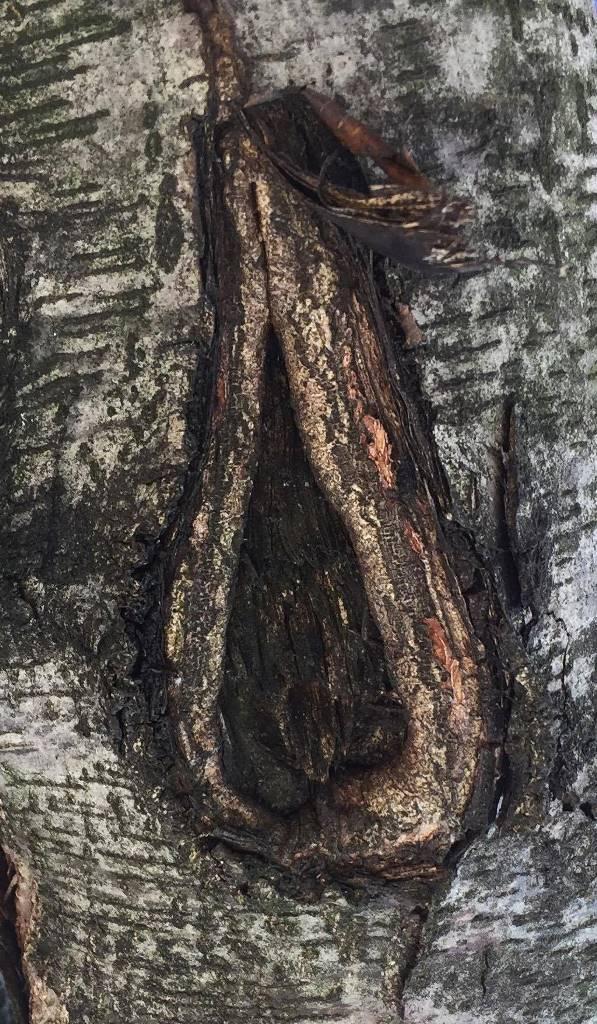 木のぽっかり割れ目