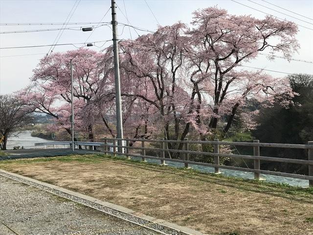 29.4.10 桜1