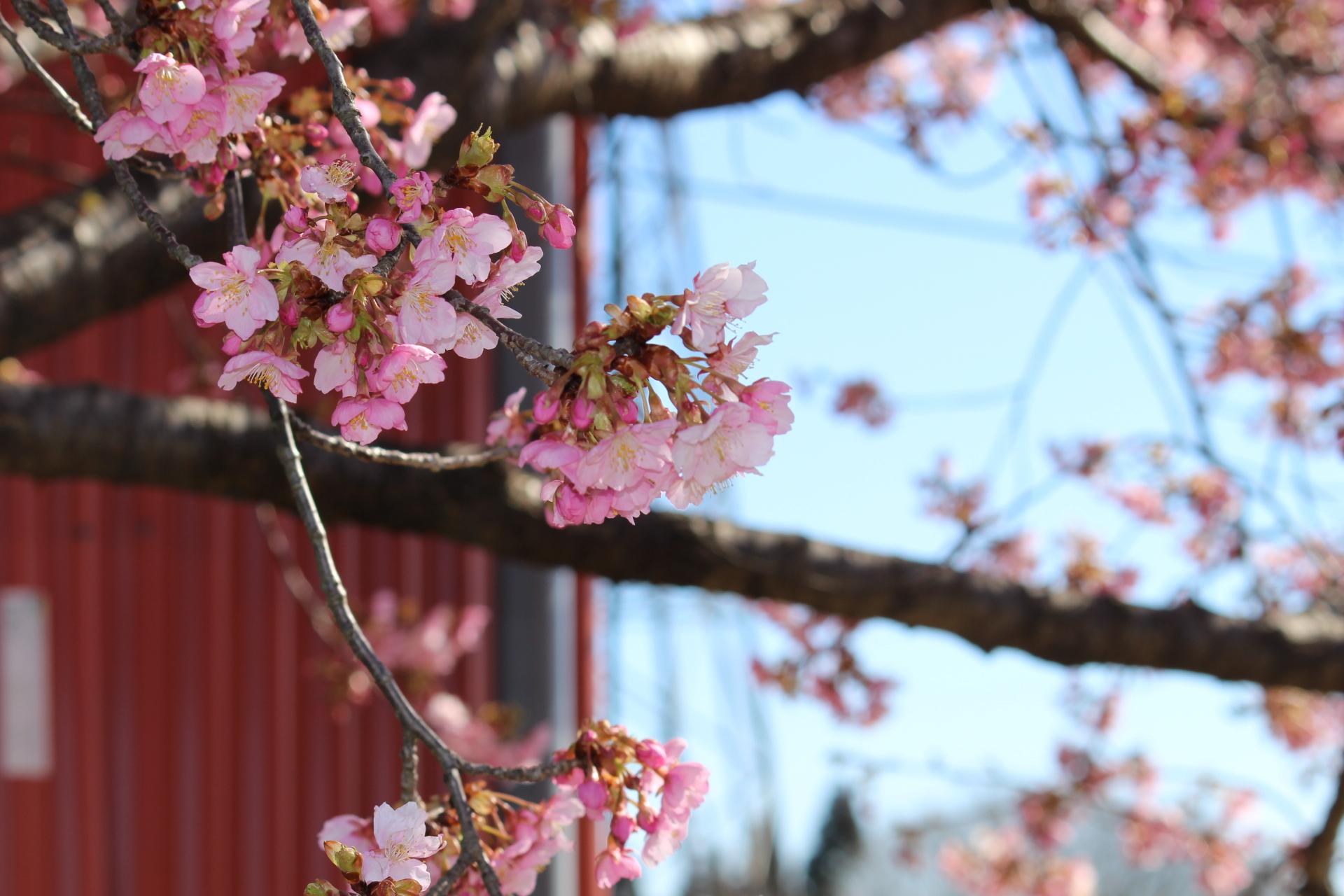 2017春