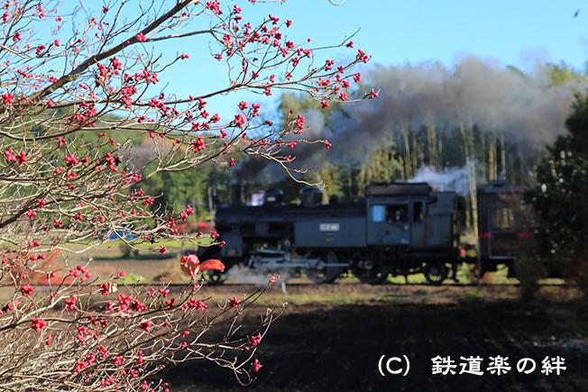 20151205多田羅01