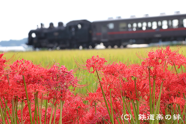 20160925七井1DX2