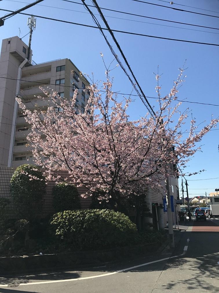 写真 2017-03-16 8 46 07