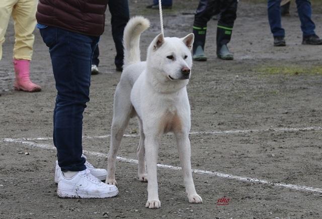 H29春季大阪展 春木の太狼