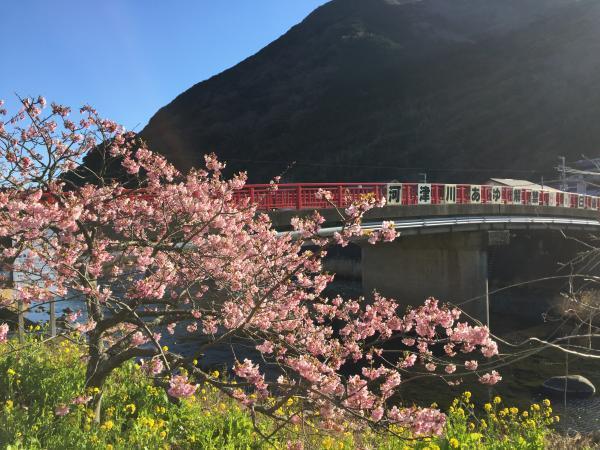 047桜と赤い橋_convert_20170216225417