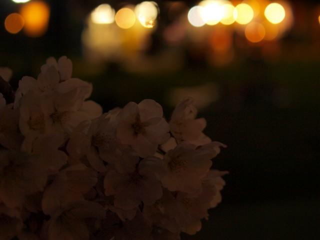 s白石川堤一目千本桜3