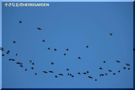470 頭上で羽ばたく鳥の群れ