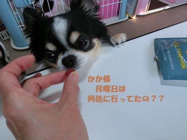 CIMG1703東京