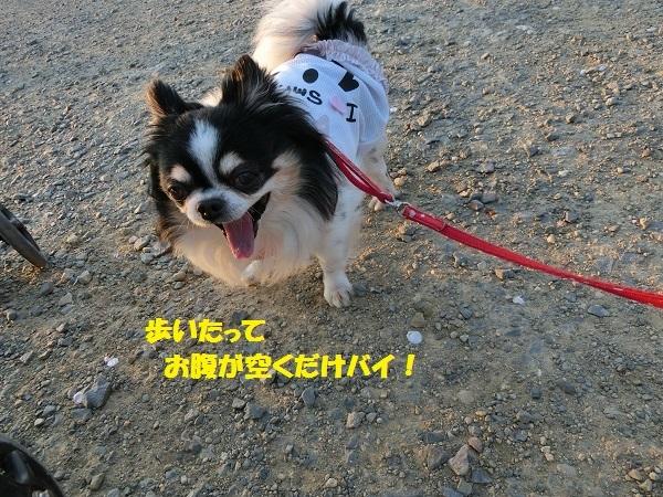 CIMG1848散歩