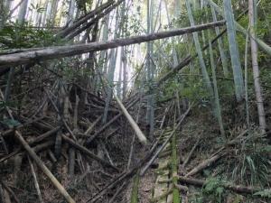 佐土原城/松尾丸への木段