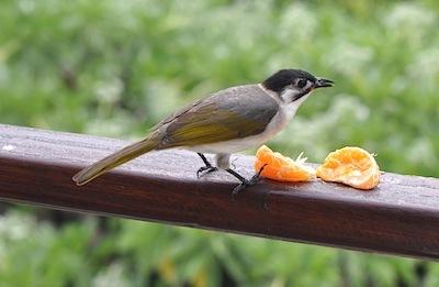 台湾の鳥1