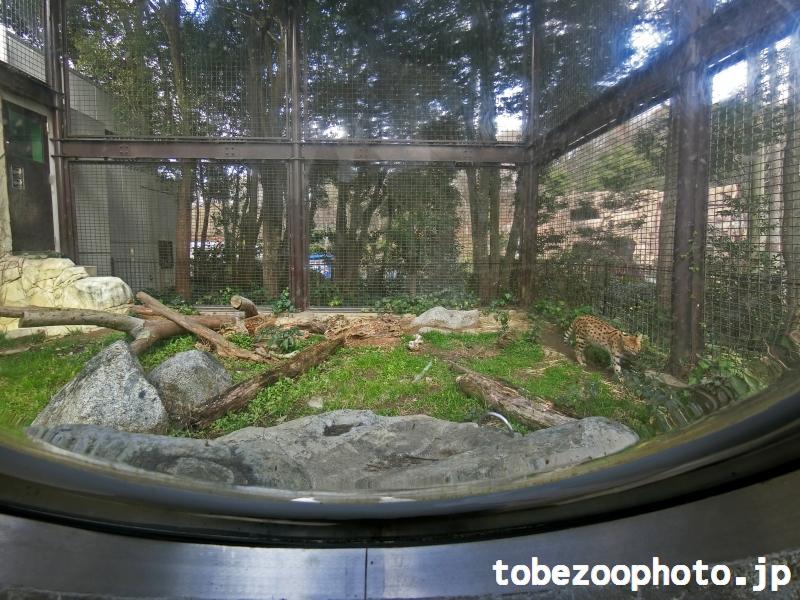 ドームから見た東側のサーバルキャットの獣舎