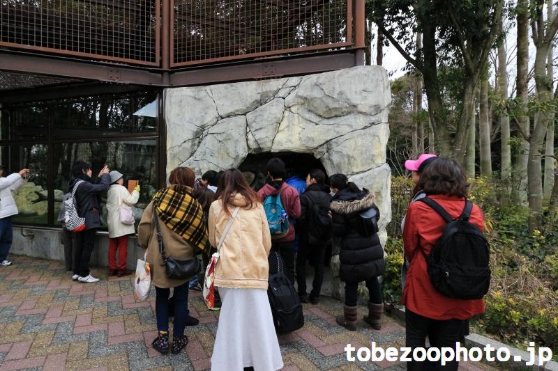 とべ動物園ねこ歩きイベント、サーバルキャット獣舎