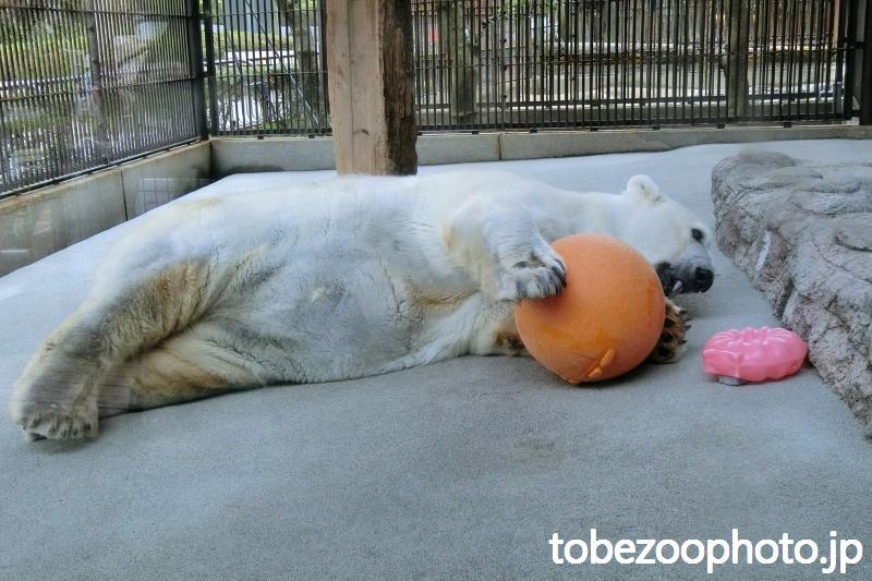 オレンジ色の丸いおもちゃ(ブイ)を抱きしめて・・・