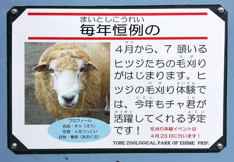 毎年恒例の 「羊 ヒツジ 名前 : チャ」