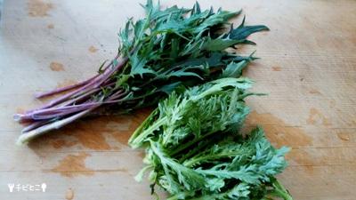 お庭の野菜たち