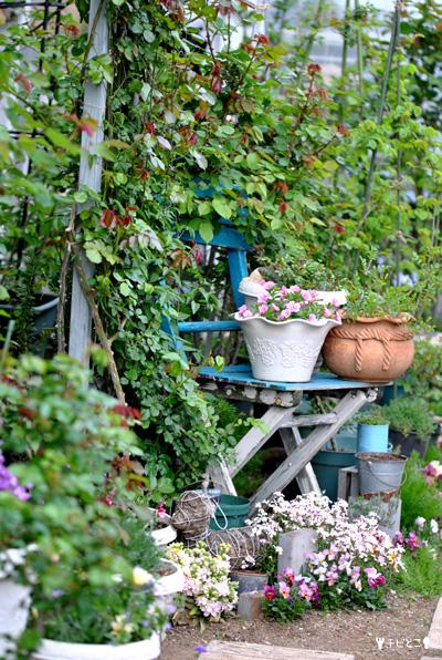 チビとこお庭の様子。。