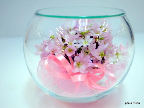 ファイブワン ボトルフラワー「桜」 |2017母の日フェア イオン