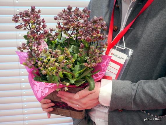 鉢植えアジサイ「八重咲ウェンディー」 イイハナ