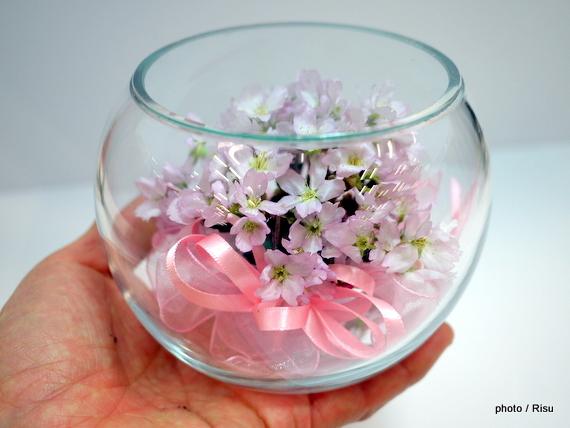 ファイブワン ボトルフラワー「桜」 【母の日】|イオン