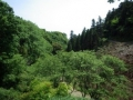 多摩森林科学園風景
