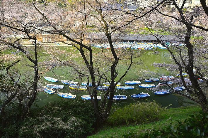 桜 千鳥ヶ淵 ボート 待機