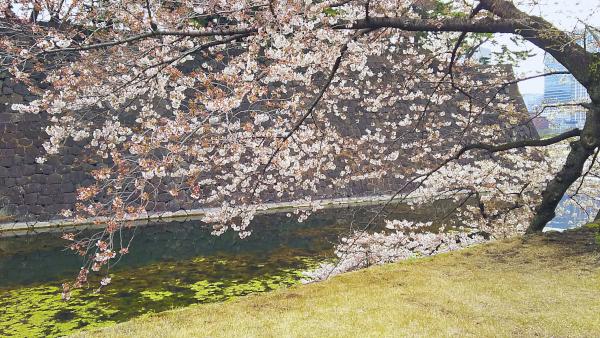 桜田門 桜