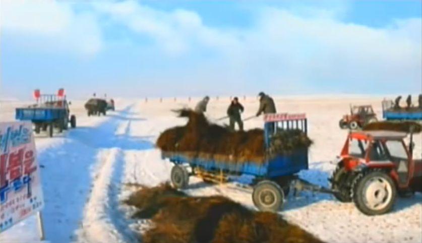 北鮮 寒冷地農場