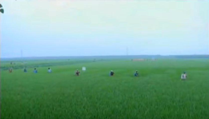 北鮮 田園農場