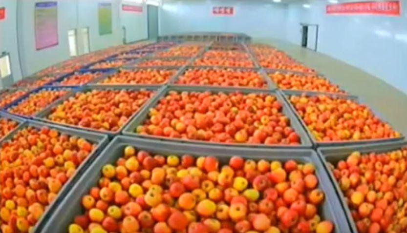 北鮮 果物置き場