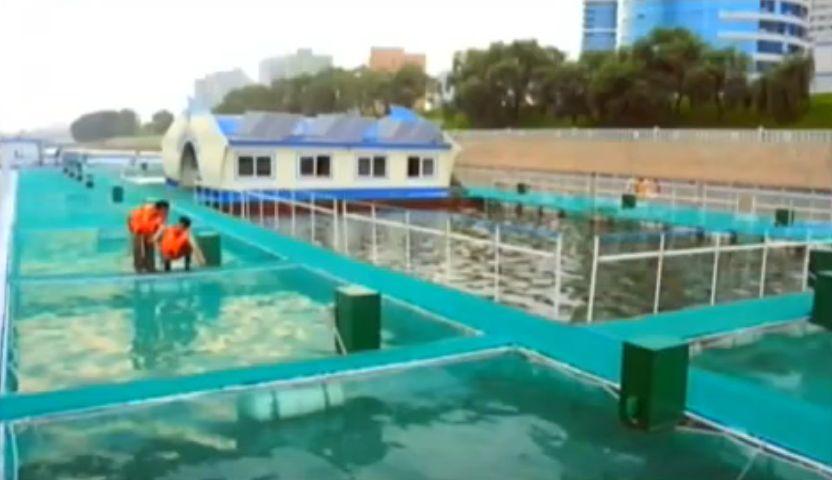 北鮮 養魚場