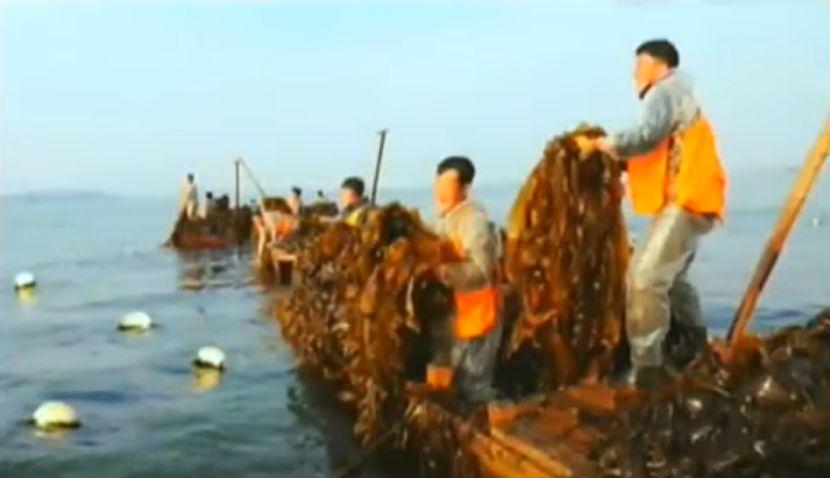 北鮮 のり養殖