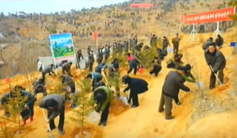 北鮮 植林