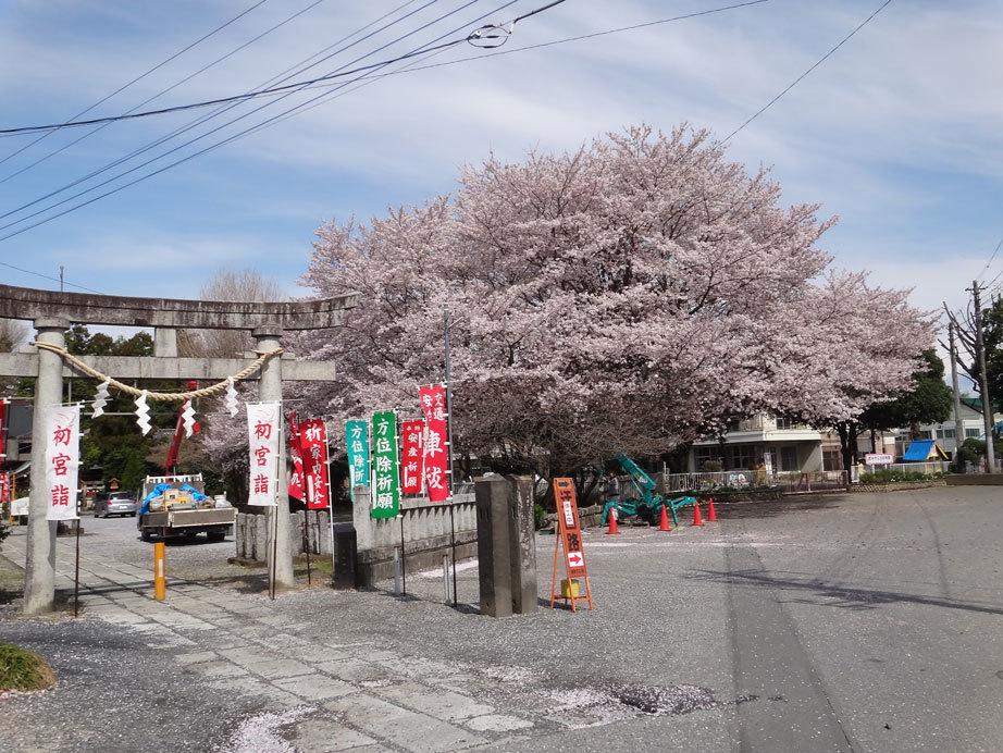 幼稚園桜2017年4月12日