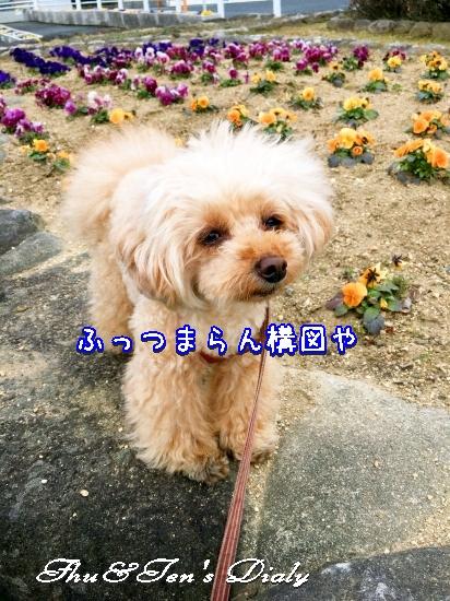 005aIMG_4668.jpg
