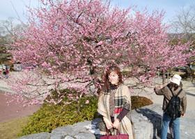 吉香公園 217紅梅
