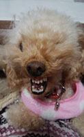 意味なく怒る犬2