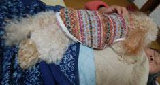 食うちゃ寝の供N1