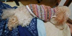 食うちゃ寝の供N2